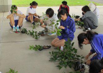 H30.10.5 中学校・取り木の鉢植え HP3